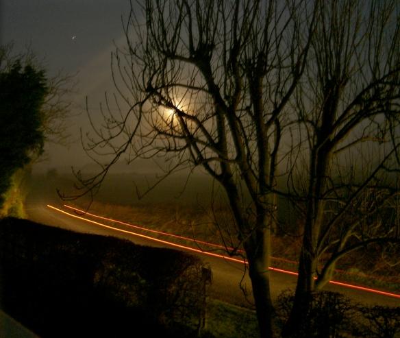 Suffolk Night Tree