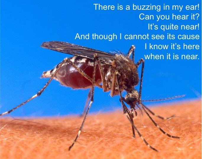mosquito night